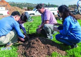 Keysight employees plant trees in Santa Rosa