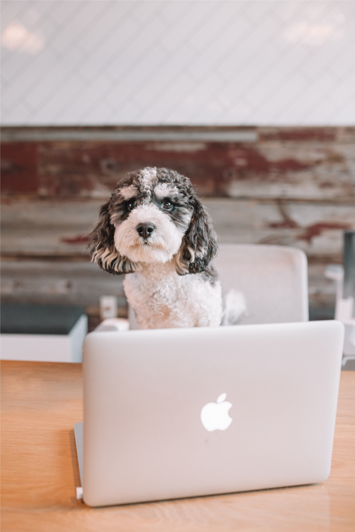 Four legged friends are welcomed to any meeting